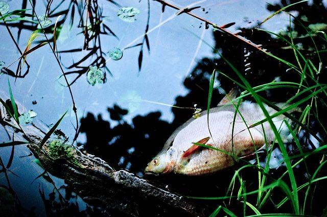 Toter Fisch - Plastik tötet Meerestiere - Leben ohne Plastik