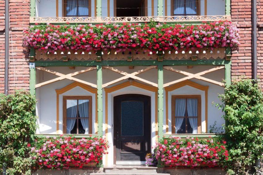 Balkon Pflanzen Ideen