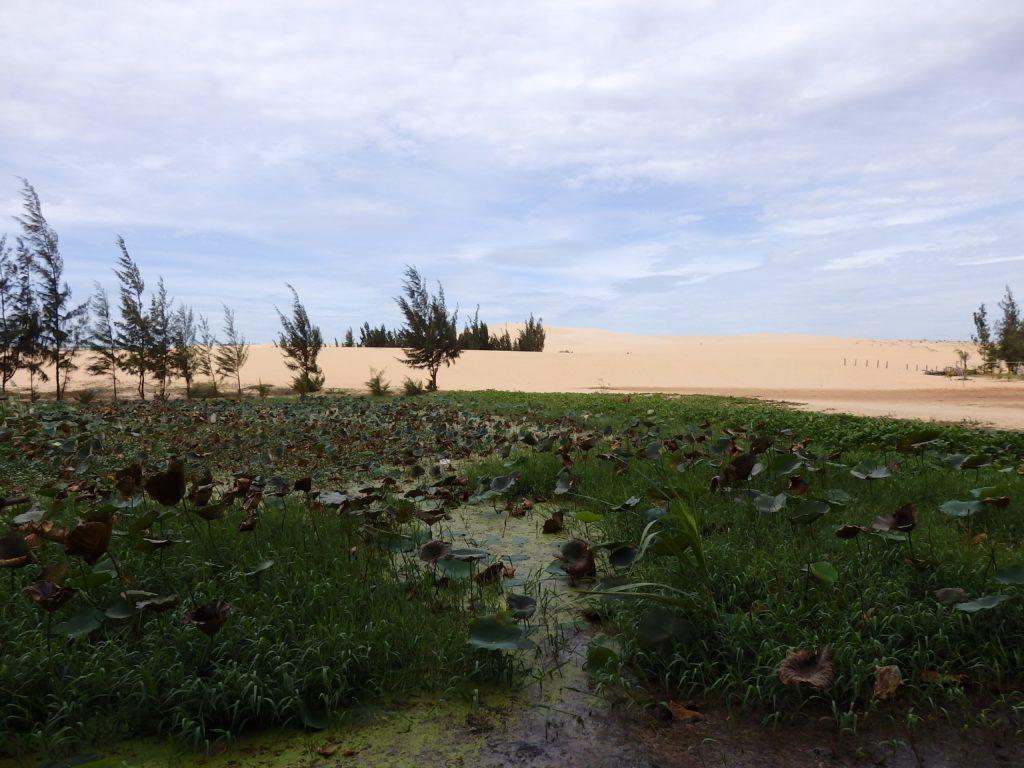 Nachhaltig Reisen Wüste Natur grün Himmel blau