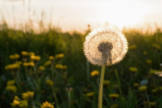 Nachhaltig Leben Tipps Blog Definition Argumente