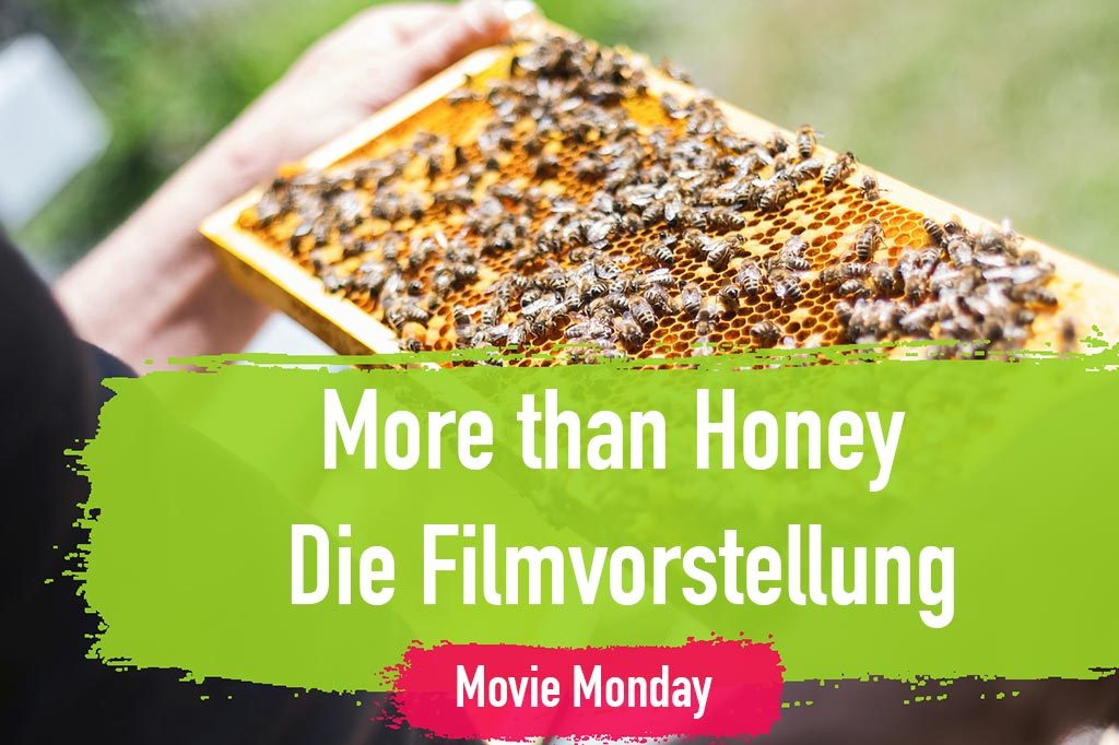 More than Honey Filmvorstellung