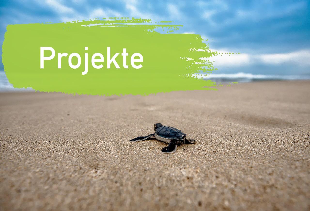 Projekte EcoYou Nachhaltig und Plastikfrei