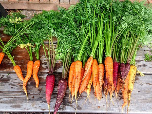 Unverpackt Einkaufen – Frisches Karottengemüse – Einkaufen auf dem Wochenmarkt – Leben ohne Plastik EcoYou Tipps