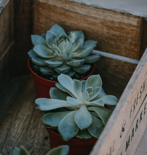 Weinkisten alte Holzkisten für dein Holzbett EcoYou Anleitung