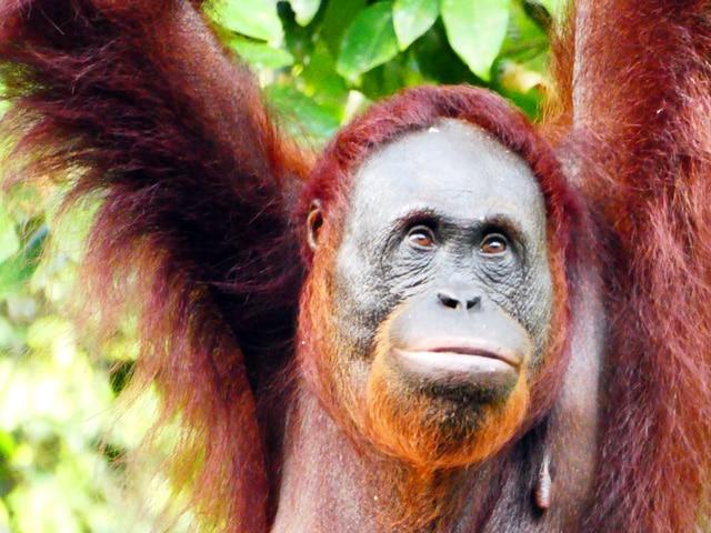 Palmölfreie Haarseife Regenwald Rossmann dm Haarwaschseife für Haare waschen