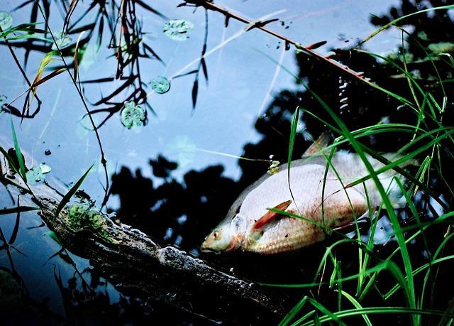 Toter Fisch - Plastik tötet Meerestiere - Plastikfrei Leben ohne Plastik - Plastikfrei einkaufen - Mikroplastik Meer Fische