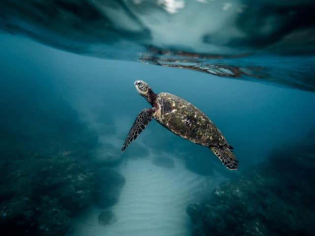 Meer Müll Abfall im Meer Plastikfrei Leben Plastikmüll Schildkröte EcoYou Blog Folgen Fakten Ursachen