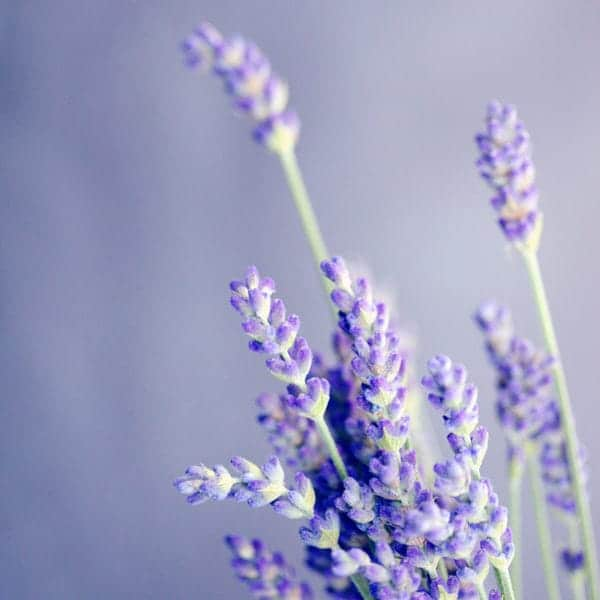 Lavendel Deo selber machen DIY Natron Natur Zero Waste Badezimmer EcoYou Bad Tipps Blog