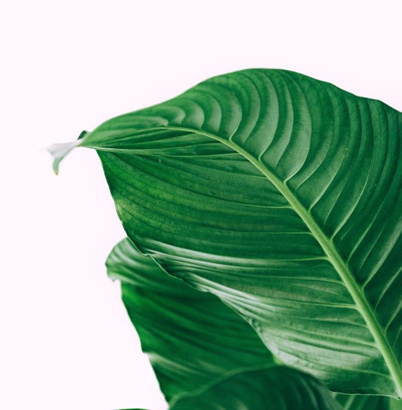 Nachhaltigkeit Pflanze Tipps Grün Nachhaltig