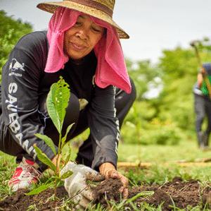 bäume pflanzen beitrag leisten ecoyou umweltschutz naturschutz nachhaltigkeit