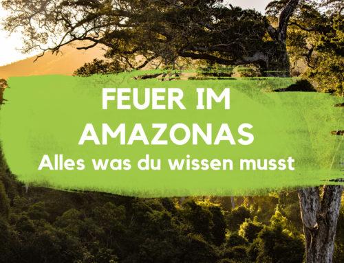 Feuer im Amazonas – Alles was du wissen musst